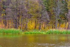 Photo of orange autumn forest with leaves near the lake Stock Photos