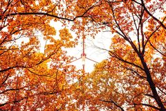 Photo of orange autumn forest with leaves and TV tower Stock Photography