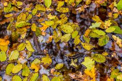 Photo of orange autumn forest with leaves and water. Photo of beautiful orange autumn forest with leaves and water Stock Photography