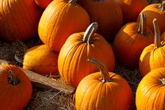 Photo of beautiful pumpkins at outdoor farmer local market in sunny autumn day. Royalty Free Stock Images
