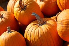 Photo of beautiful pumpkins at outdoor farmer local market in sunny autumn day. Photo of beautiful pumpkins at outdoor farmer local market in sunny autumn day Stock Photo