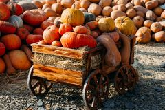 Photo of beautiful pumpkins at outdoor farmer local market in sunny autumn day royalty free stock image