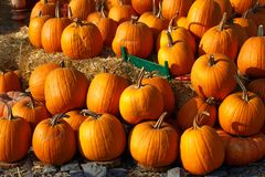 Photo of beautiful pumpkins at outdoor farmer local market in sunny autumn day. Royalty Free Stock Image