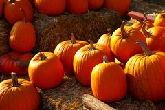Photo of beautiful pumpkins at outdoor farmer local market in sunny autumn day. Photo of beautiful pumpkins at outdoor farmer local market in sunny autumn day Royalty Free Stock Images