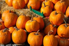 Photo of beautiful pumpkins at outdoor farmer local market in sunny autumn day. Photo of beautiful pumpkins at outdoor farmer local market in sunny autumn day Stock Photography