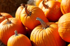 Photo of beautiful pumpkins at outdoor farmer local market in sunny autumn day. Photo of beautiful pumpkins at outdoor farmer local market in sunny autumn day Royalty Free Stock Photo