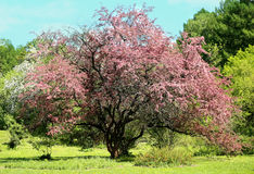 Photo Beautiful spring flowering tree Stock Photos