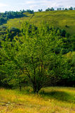 Photo of a beautiful tree and green grass. At summer Royalty Free Stock Photography