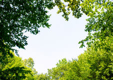 Photo of a big gap among trees in a green forest. Photo of a big gap among trees in a green beautiful forest Stock Images