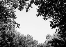 Photo of a big gap among trees in a green forest black and white Stock Photography