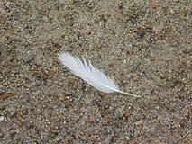 A bird`s feather Stock Photo