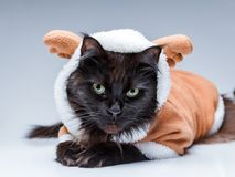 Photo of black cat in deer suit. On empty gray background Stock Images