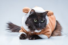 Photo of black cat in deer suit. On empty gray background Royalty Free Stock Photography