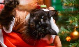 Photo of black cat in deer suit at Santa`s arms Stock Photos