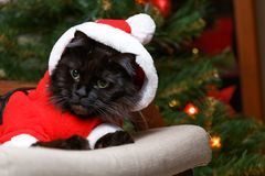 Photo of black cat in santa costume in armchair. Against background of adecorated Christmas tree Stock Photography
