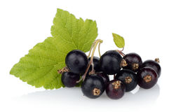 Photo of blackcurrant with leaf  on white Royalty Free Stock Image