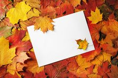 Paper, maple leaves stock photography
