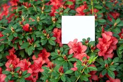 Photo of blooming flowers with white paper blank in light orangery stock image