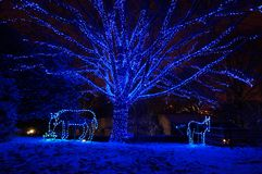 Blue Christmas Tree and Animals. Photo of blue christmas tree and two animals at the zoo lights at the national zoo in washington dc at night. There is a light Stock Image