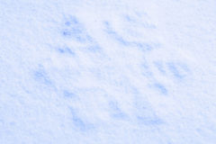 Photo blue snow Stock Images