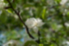 Photo blurred garden background Stock Image