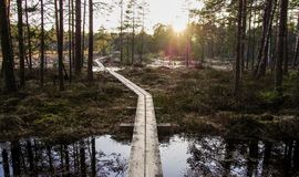 Photo of Boardwalk Between Forest Trees royalty free stock image