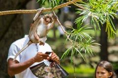 Photo-bombardé par un singe images libres de droits