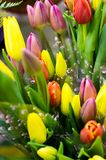 Photo of a bouquet of tulips. Bulbous spring-flowering plant of stock images