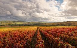 Bourgogne vineyard for Burgundy wine stock photo