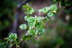 On the photo is a branch of a bush and a tree with a blurred background royalty free stock photo