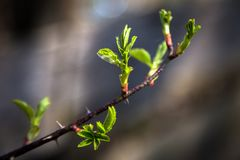 On the photo is a branch of a bush and a tree with a blurred background royalty free stock images