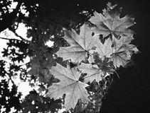 Photo of the branch in a green forest black and white Royalty Free Stock Photo