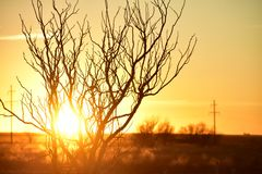 Photo of Branches during Golden Hour Stock Photography