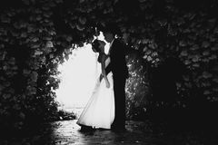 Photo of bride and groom dancing at tree tunnel Stock Image