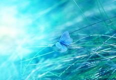 Photo of a bright blue butterfly Stock Photos