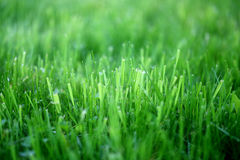 Photo of a bright green grass. On a meadow Royalty Free Stock Photo