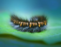 Photo of bright macro patterned caterpillar Stock Photography