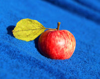 Photo of bright red apples Stock Photo