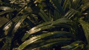 Brilliant green leaves still wet from the rain. A photo of brilliant green leaves still wet from the rain, taken at night royalty free stock image