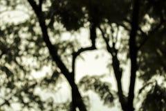 Photo brouillée par forêt de nuit Image libre de droits