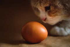 Photo of a brown chicken egg with a ginger cat on a brown background.  royalty free stock photo