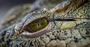 Photo of Brown and Green Reptile Stock Photo
