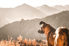 Dog looking towards the mountain