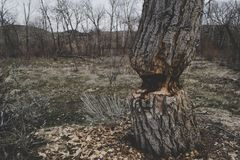 Photo of Brown Tree Trunk Royalty Free Stock Photography