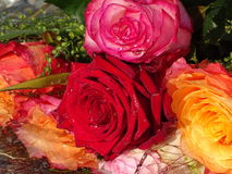 A brunch of roses in the water. In the photo is a brunch of roses in the water Stock Image