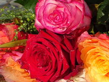 A brunch of roses in the water. In the photo is a brunch of roses in the water Royalty Free Stock Images