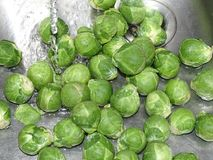 Brussels sprout washing. In the photo is a Brussels sprout under a stream of water Stock Images