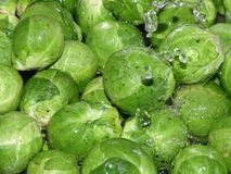 Brussels sprout washing. In the photo is a Brussels sprout under a stream of water Royalty Free Stock Photo