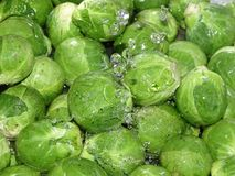 Brussels sprout washing. In the photo is a Brussels sprout under a stream of water Stock Photo