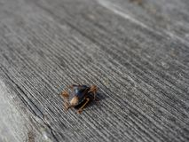 Bug. Photo of a bug on the background of a tree Royalty Free Stock Image